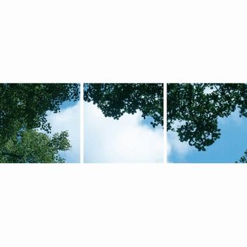 Fotoprinnt wolk-bos 3