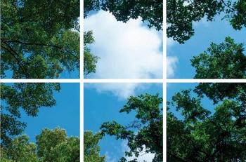 Fotoprinnt wolk-bos 6